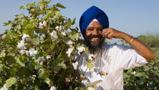Covering the Cotton Value Chain